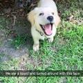 good pupper