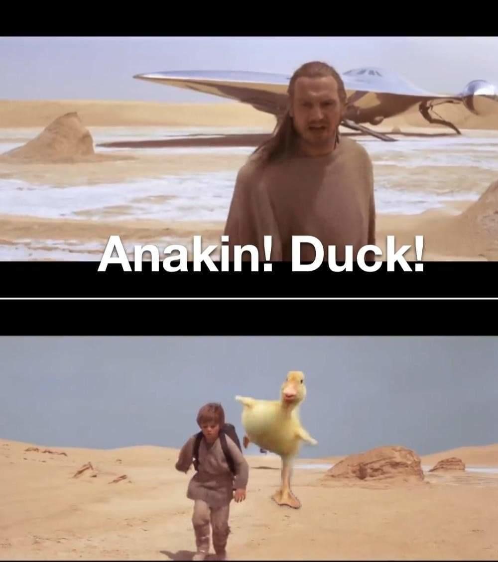 Ducking fuck - meme