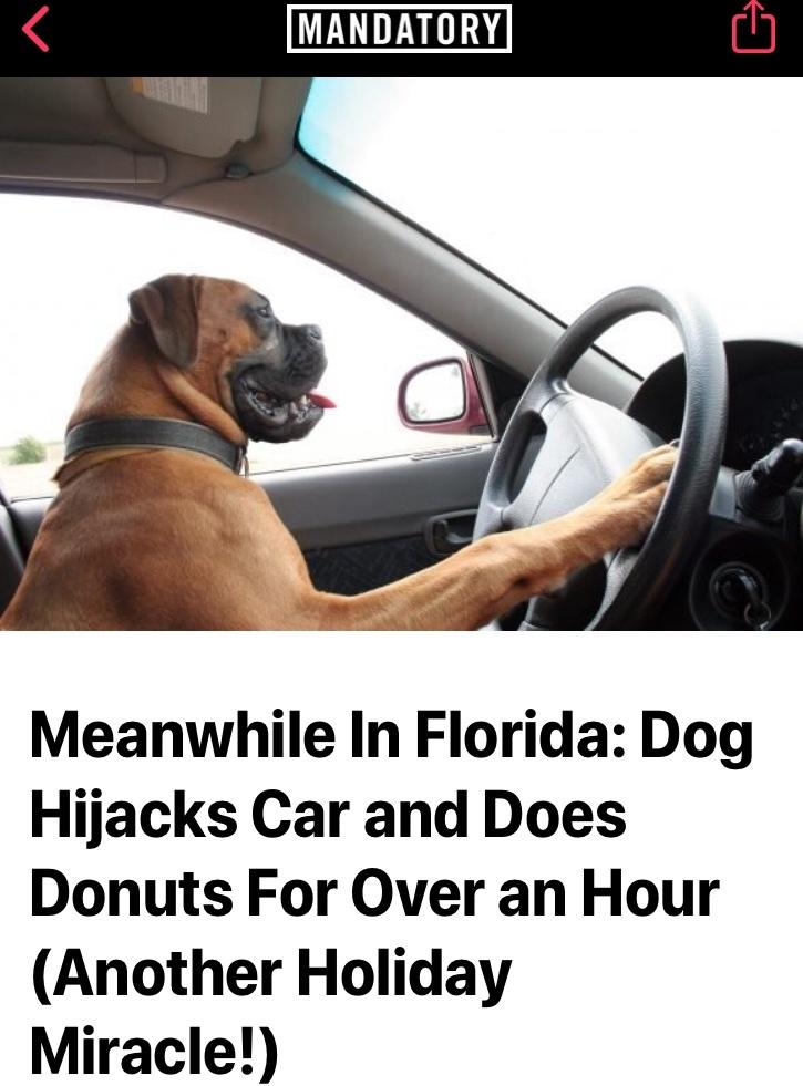Florida man's pet Florida dog - meme