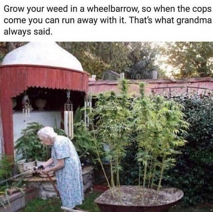 Grandma knows best - meme