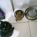 mi sapo encontro la comida de mi gato