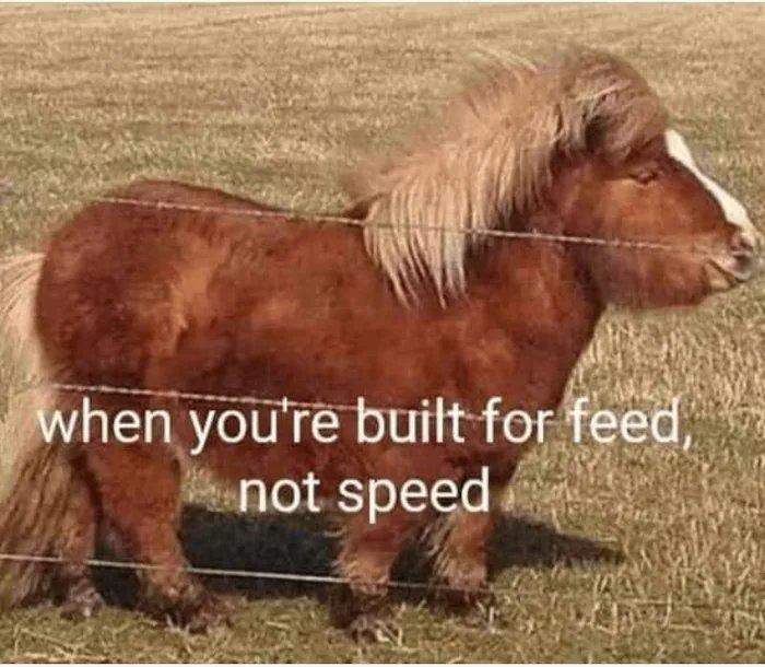 Horseee - meme