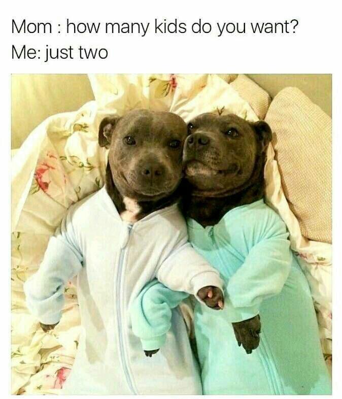 Kids puppies - meme