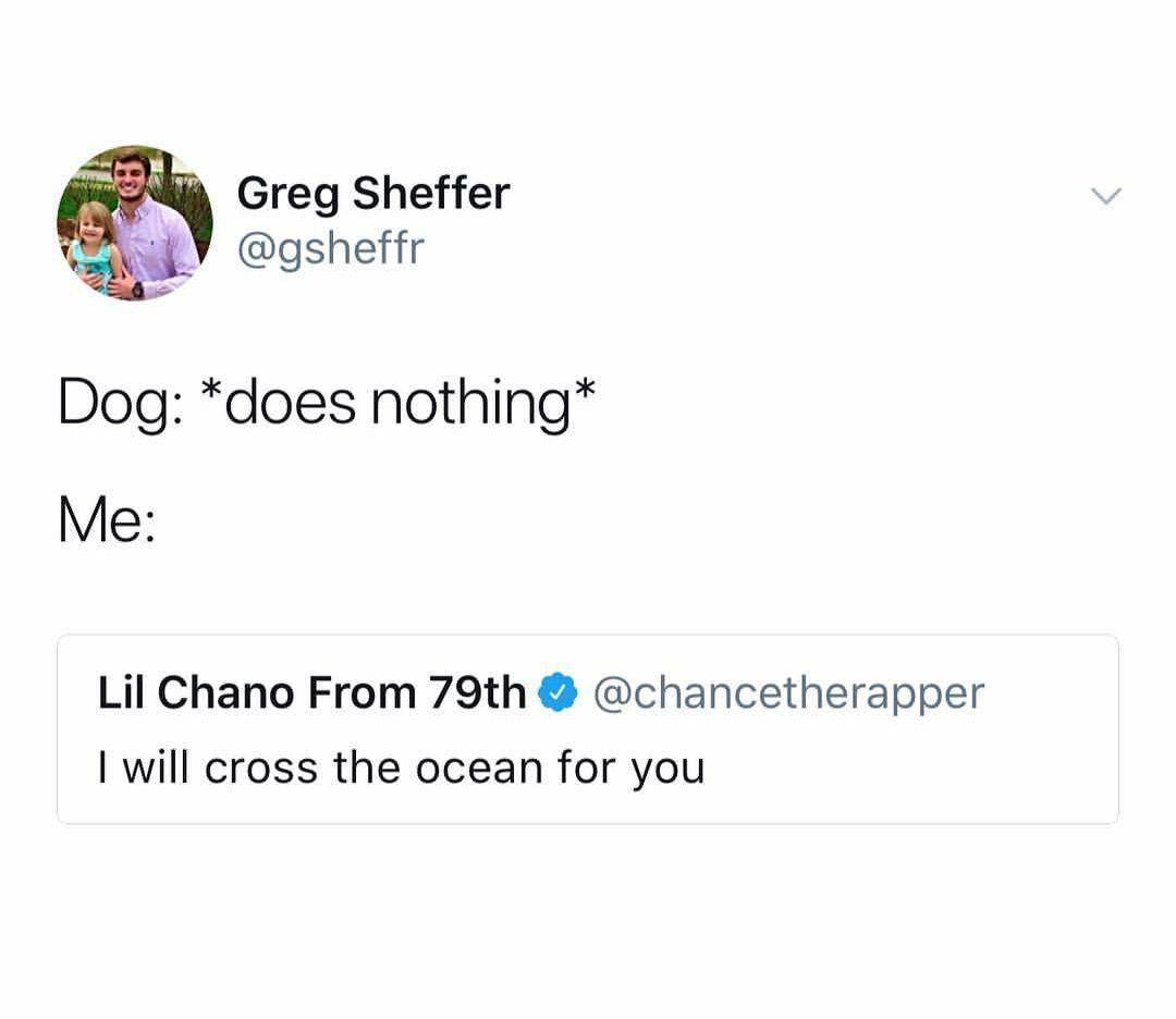 doggos are love - meme