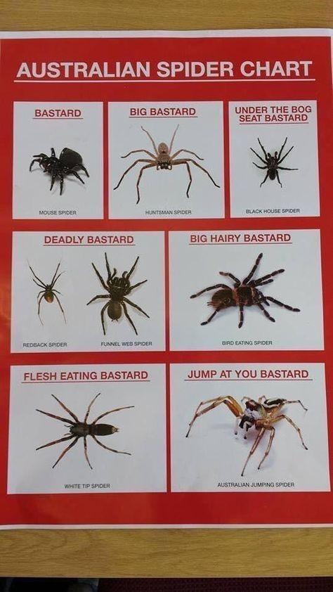 Spiders of Australia - meme
