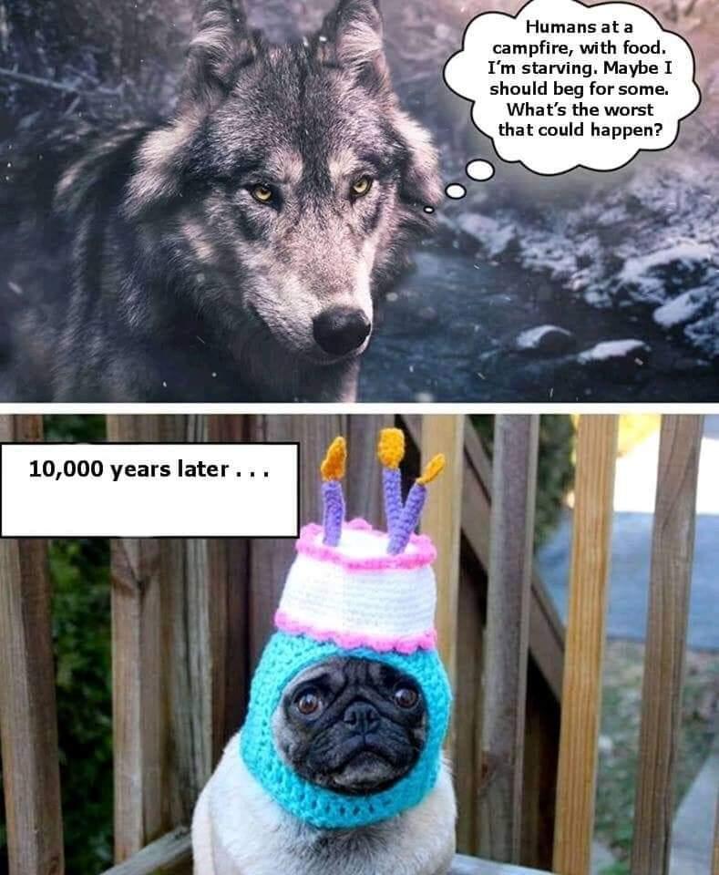 The evolution of dogs - meme