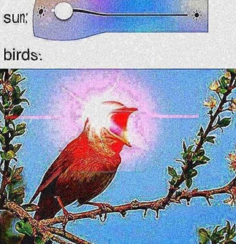 SQUAAAAAAAAAAAAK - meme